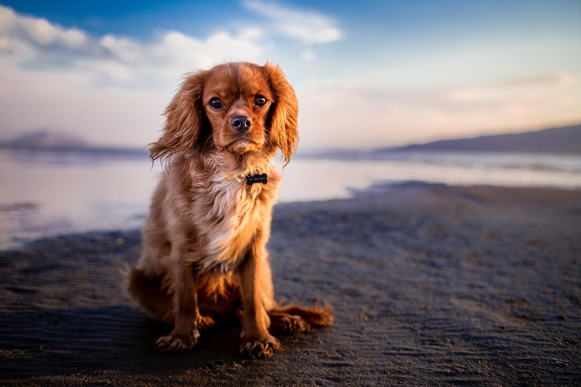 Hund som sitter på marken